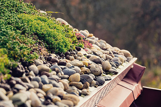 Green Roof with Moss Planting